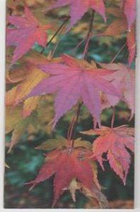 Duneira Autumn